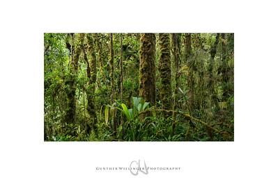 Mountain Rainforest