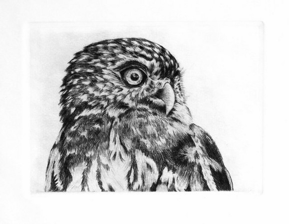 "Pygmy Owl, Artist Proof<br /> <br /> Dry-point on zinc, printed on ""Domestic Etch"" proofing paper with Graphic Chemical's ""Blue Black"" etching ink."