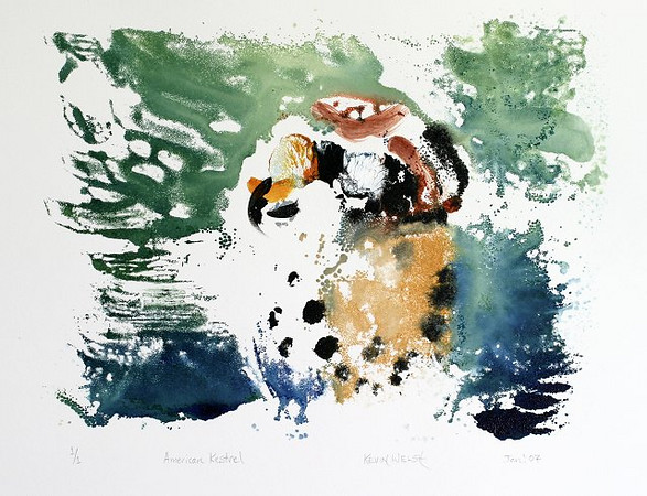 "American Kestrel Mono-Type<br /> <br /> Golden heavy bodied acrylics painted onto a glass plate and hand printed onto Arches ""88"" paper."