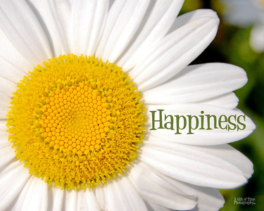 Happiness daisy 8x10