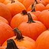 pumpkins 8x10