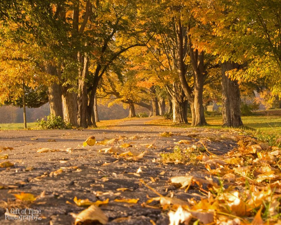 fall road 8x10