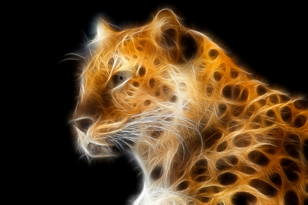 Burning Leopard