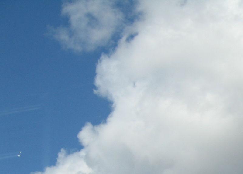 Shrimp cloud 2