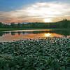 sunset-on-the-lilypads_144848149_o