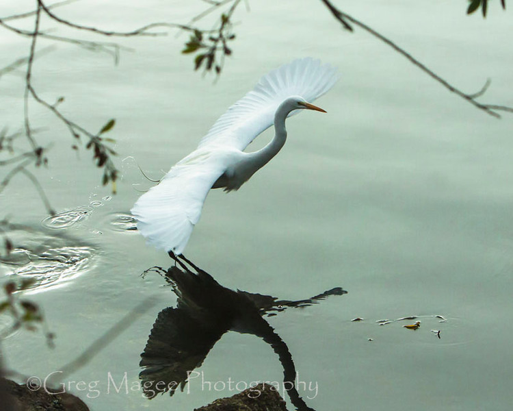 mirrored egret with natural framing