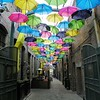 Redland's Umbrella Alley - 11