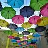 Redland's Umbrella Alley - 13