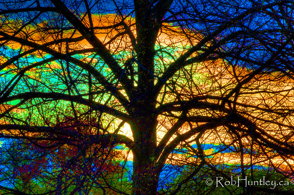 """Stained Glass Tree - Backlit tree at sunset in the arboretum in Ottawa, Ontario, Canada. High grain. HDR used then saturation enhanced, somewhat """"over the top"""" but I like it."""