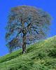 TreeProjectB8x10