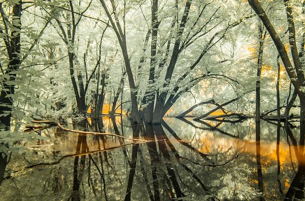 Tree Reflection 2