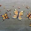 Butterflies - 17