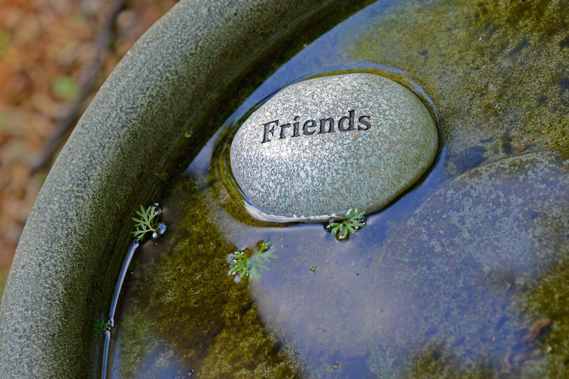 friendswater