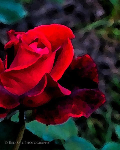 Red Rose Bud.
