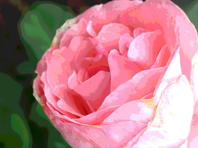 SOMMERS ROSES 2008