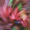 Leaf Swirl 1