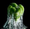 GREEN PEPPER #2<br /> Fish Tank Splash
