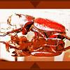 Coelosis biloba - Rhino beetle