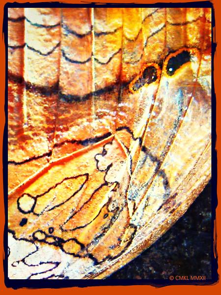 Angel wing or mariposa