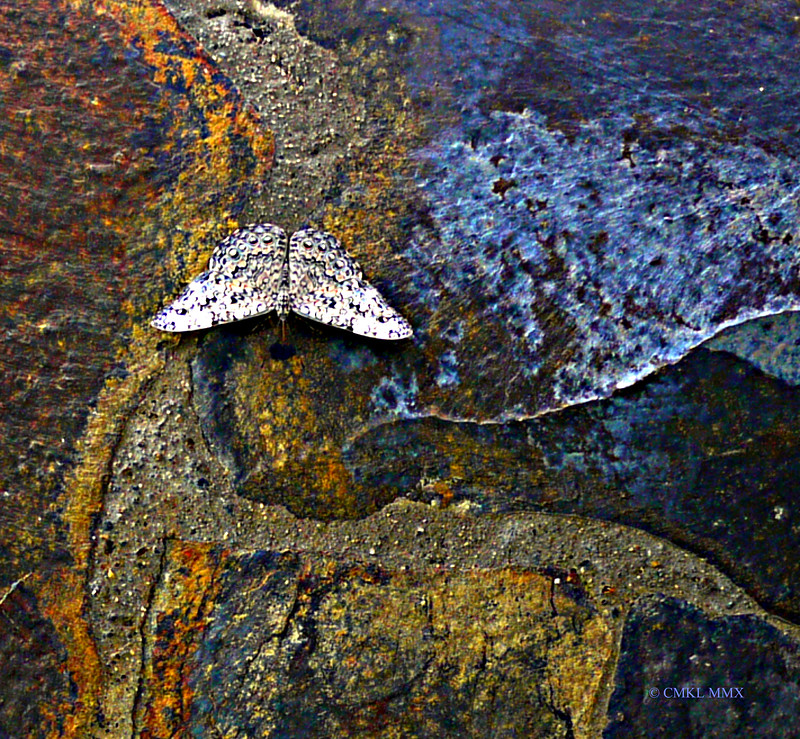 Wall with Moth
