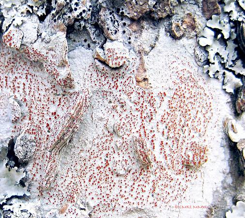 Bark & Lichen Macros