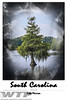 Cypress Tree SignatureSeries_12x18General01