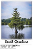 Cypress Tree SignatureSeries_12x18General01-2