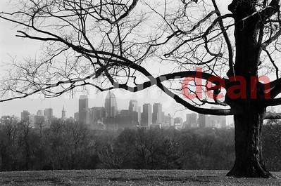 Tree Over Philadelphia