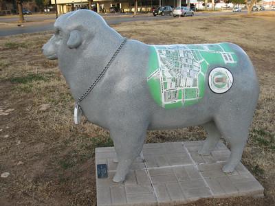 "AS""Ewe""  YMCA, 353 S. Randolph Gray with campus map on back, ASU logo around neck."