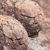 Flechten, Felsen, Felsformation, Dracheneier, Drakensberge, Royal Natal National Park, Südafrika, South Africa, Drakensberge