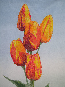 Rembrandt Tulips by Silver Lining. Close up of flowers.