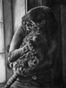 """Kitty""<br /> Size: 18"" x 42""<br /> Medium: Charcoal on paper<br /> December 2009"