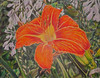 """Daylily""<br /> Size: 18"" x 14""<br /> Medium: Color pencil on paper<br /> November 2010"