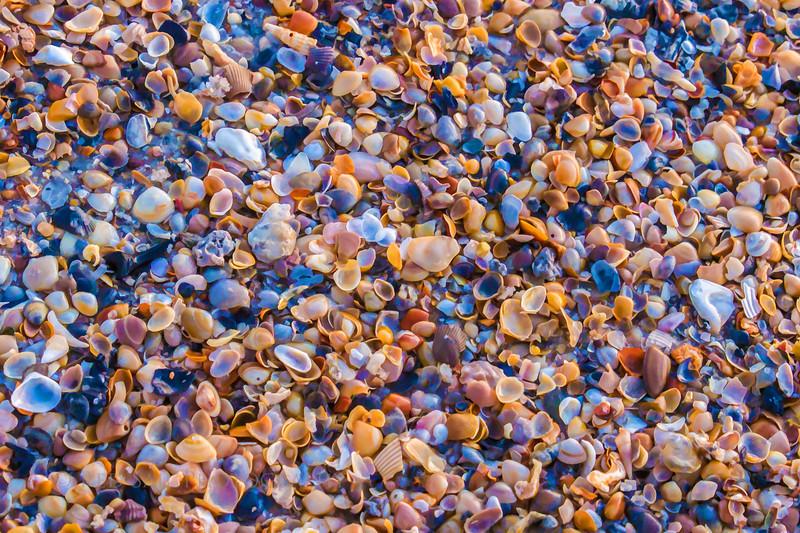I Sell Sea Shells
