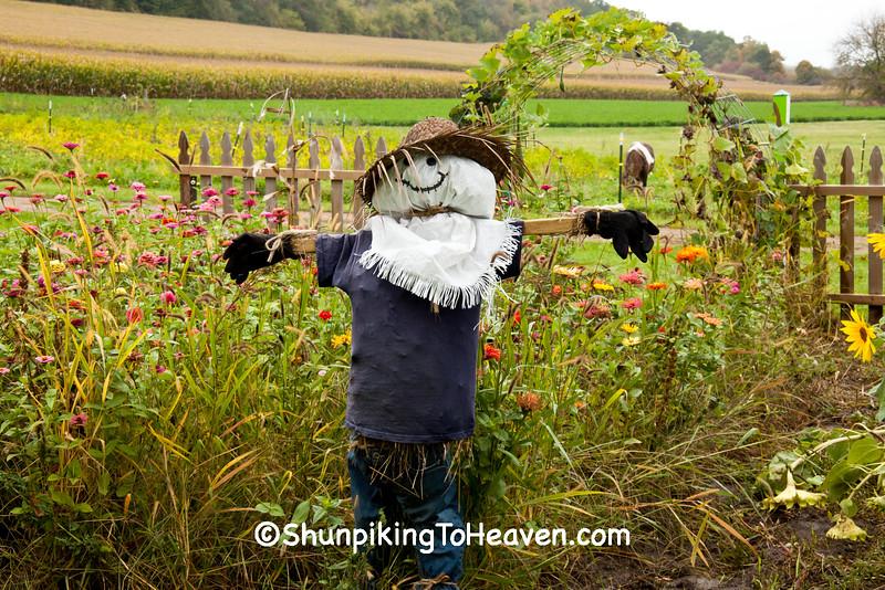 Autumn Garden with Scarecrow, Sauk County, Wisconsin