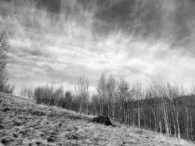 Glenbield Trees and Sky