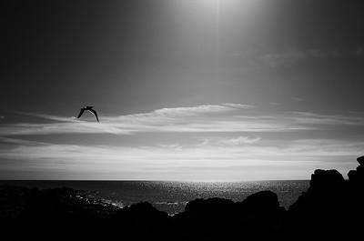 Seagull sun