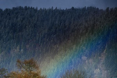 Rainbow and trees Foyers