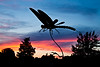 Dragonfly Sculpture at Sunset, West Bend, Wisconsin