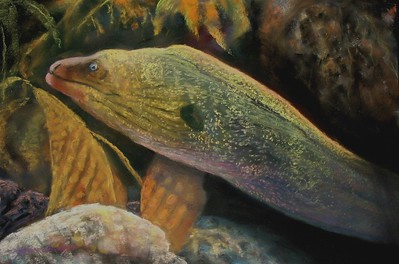 "Moray Eel 12 1/2"" x19 1/2""  Soft Pastel on  La Carte Sanded Ppaer"