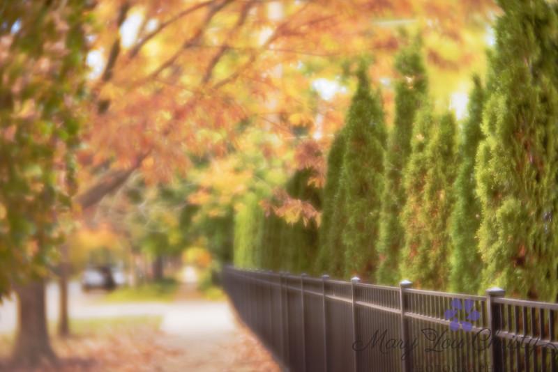 Lensbaby Autumn