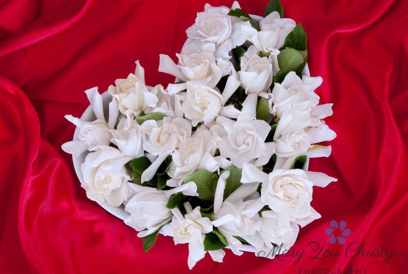 Gardenia Valentine