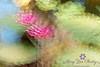 Monet like Waterlilies