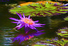 Impressionistic Waterlily