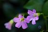 Purple Wildflowers2