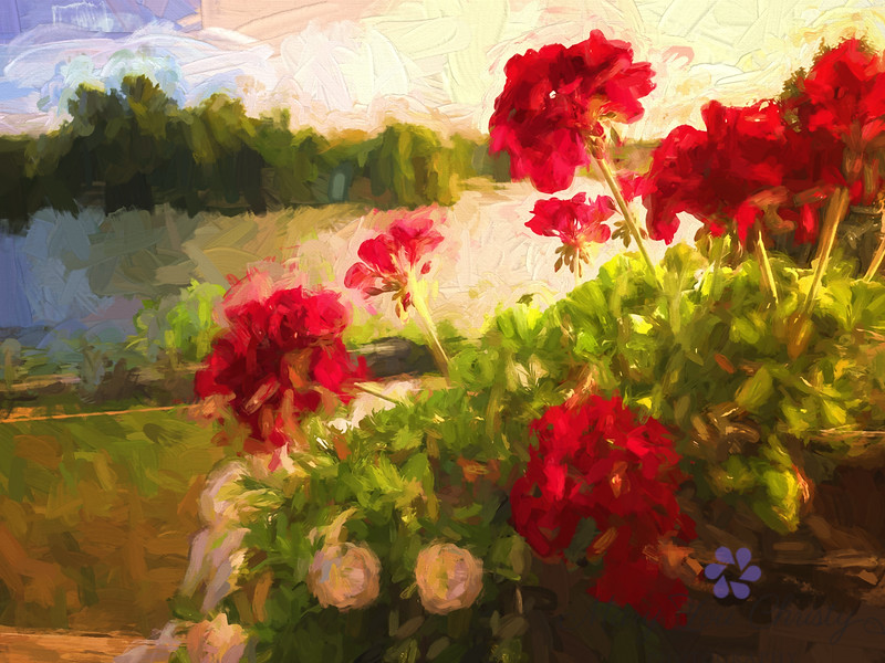 Geraniums in Late light
