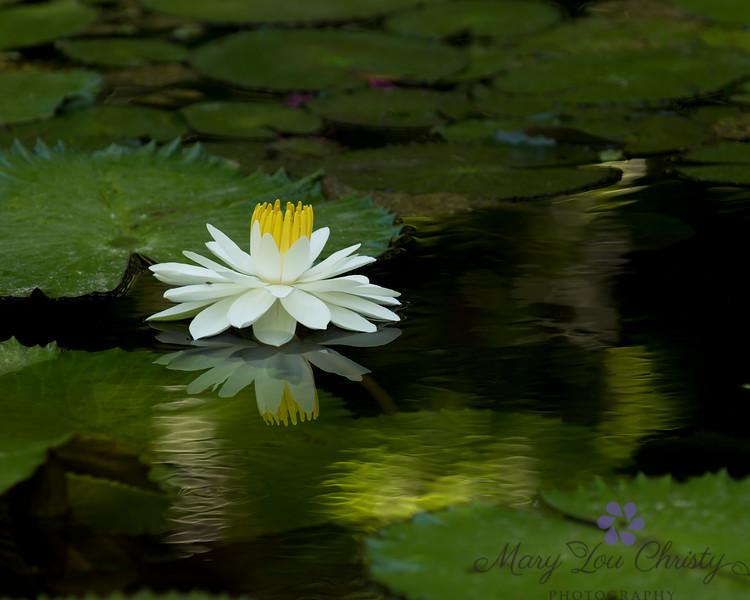 May Reflection