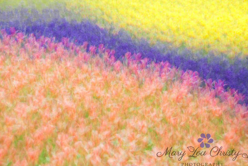 Multiple Exposure Spring Garden