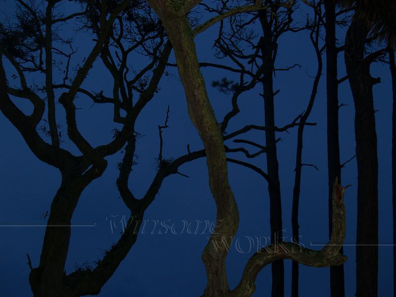 Weird Trees at Night, Hunting Island