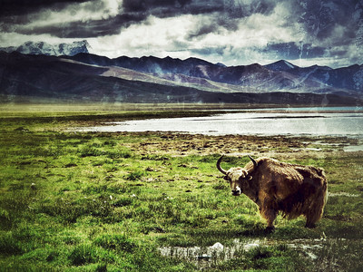 Nam Tso Lake, Tibet, July 2010
